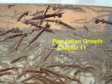Population Growth – Chapter 11. Growth With Discrete Generations Species with a single annual breeding season and a life span of one year (ex. annual.