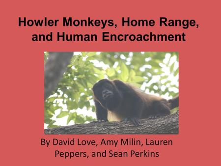 Howler Monkeys, Home Range, and Human Encroachment By David Love, Amy Milin, Lauren Peppers, and Sean Perkins.