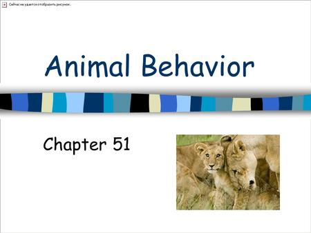 Animal Behavior Chapter 51. Behavior Animal responds to stimuli Food odor Singing.
