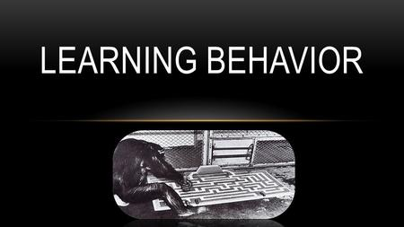 LEARNING BEHAVIOR. WHAT IS LEARNING???? LEARNING IS EXPERIENCE-BASED MODIFICATION OF BEHAVIOR Animals need not witness a developmentally fixed (innate)