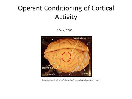 Operant Conditioning of Cortical Activity  E Fetz, 1969.