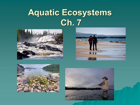 Aquatic Ecosystems Ch. 7. Bellringer Objectives  Describe the factors that determine where an organism lives in an aquatic ecosystem.  Describe the.