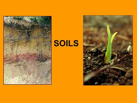 SOILS Great civilizations began because of farming... good soil and fresh water is needed for farming Ancient Egyptian and Mesopotamian societies are.