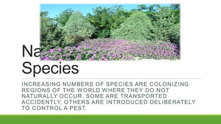 Native and Invasive Species INCREASING NUMBERS OF SPECIES ARE COLONIZING REGIONS OF THE WORLD WHERE THEY DO NOT NATURALLY OCCUR. SOME ARE TRANSPORTED ACCIDENTLY,