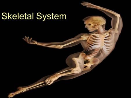 Skeletal System. The skeletal System... What are the general components of the skeletal system? What does the skeletal system do for you & how does it.