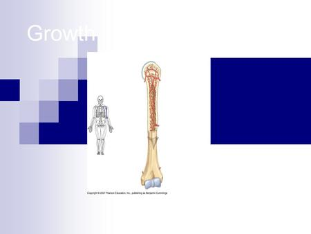 Growth. Identify 3 types of bone cells 1. 2. 3. 3 types of bone cells Osteocytes (osteons) – mature bone cells, in both spongy and compact bone Osteoclasts-