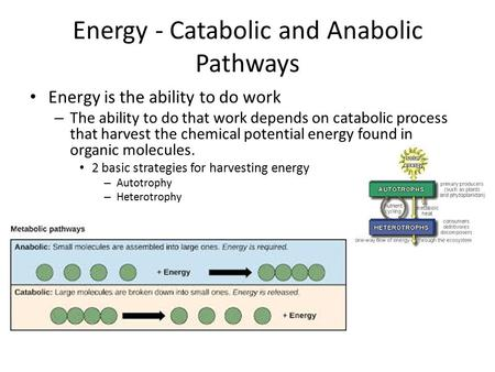 Energy - Catabolic and Anabolic Pathways Energy is the ability to do work – The ability to do that work depends on catabolic process that harvest the chemical.