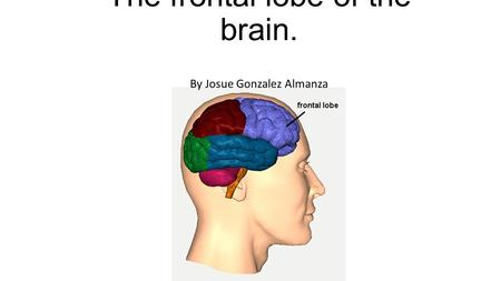 The frontal lobe of the brain. By Josue Gonzalez Almanza.