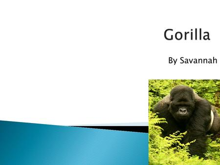 By Savannah.  Gorillas live in Eastern Zaire  Biome-mountain  Type of home- they make a nest in trees.