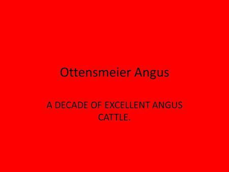 Ottensmeier Angus A DECADE OF EXCELLENT ANGUS CATTLE.