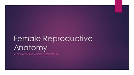 Female Reproductive Anatomy ALEX HAMMANT AND PHIL COPEMAN.