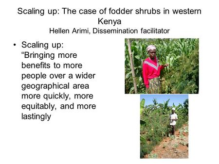 "Scaling up: The case of fodder shrubs in western Kenya Hellen Arimi, Dissemination facilitator Scaling up: ""Bringing more benefits to more people over."