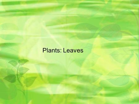 Plants: Leaves. Leaves Play role in photosynthesis, gas exchange, storage, and protection from predators. Leaf cells absorb energy from sunlight in a.