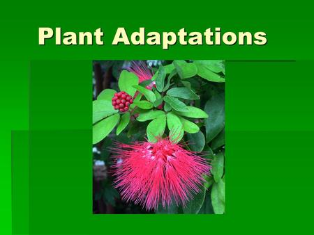 Plant Adaptations. Think  What are some challenges plants face on land?  Plants overcome these challenges with special adaptations.