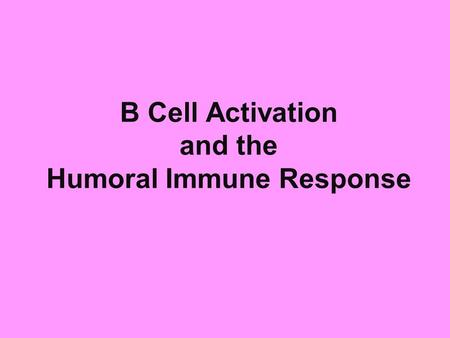 B Cell Activation and the Humoral Immune Response.