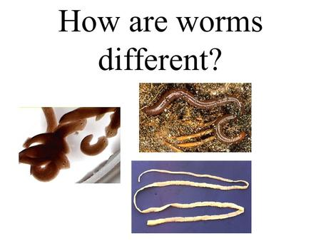 How are worms different?
