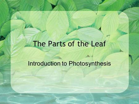 The Parts of the Leaf Introduction to Photosynthesis.