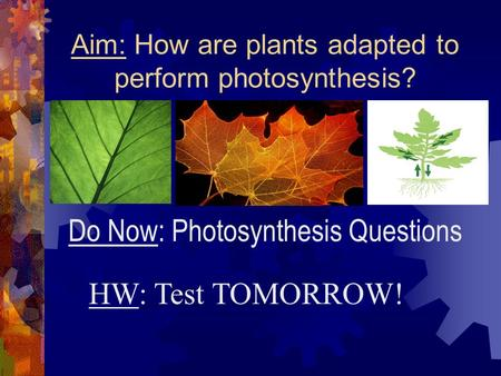 Aim: How are plants adapted to perform photosynthesis? HW: Test TOMORROW! Do Now: Photosynthesis Questions.