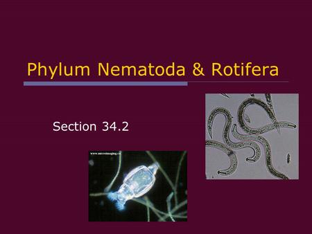 Phylum Nematoda & Rotifera Section 34.2. General Characteristics:  Bilateral symmetry  Fluid filled body cavity pseudocoelomate Holds internal organs.