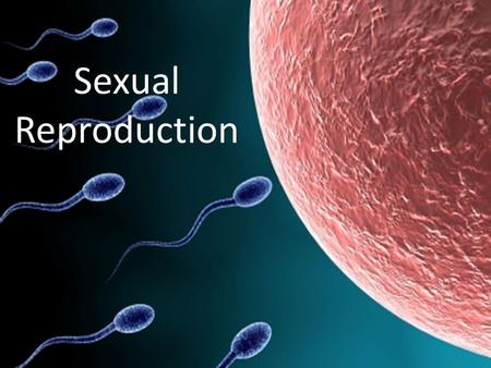 Sexual Reproduction. Key Point #1 Sexual reproduction is the process in which organisms produce gametes that combine during fertilization to create a.