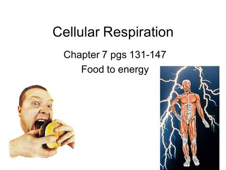 Cellular Respiration Chapter 7 pgs 131-147 Food to energy.