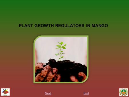 PLANT GROWTH REGULATORS IN MANGO EndNext. INTRODUCTION Plant growth regulators are organic substances which are produced in a one part of plant and it.