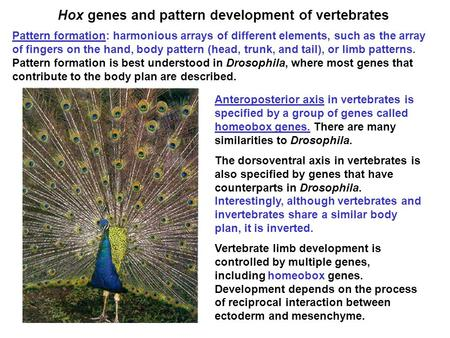 Hox genes and pattern development of vertebrates Pattern formation: harmonious arrays of different elements, such as the array of fingers on the hand,