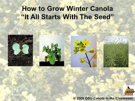 "How to Grow Winter Canola ""It All Starts With The Seed"" © 2009 OSU Canola in the Classroom."