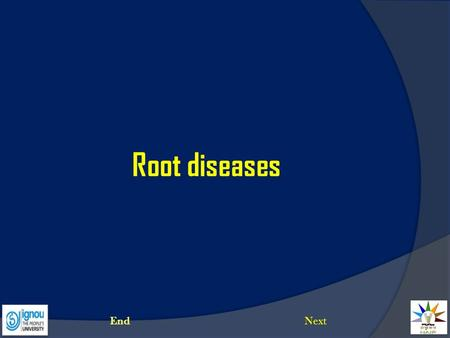 Root diseases End Next.