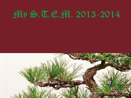 My S.T.E.M. 2013-2014. Question Which type of tree will have the most relief from the sun?