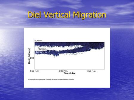 Diel Vertical Migration. Why Did Vertical Migration Evolve? 1. Seek Optimal light intensity but why?? 2. Avoid visual predators 3. Utilization of different.