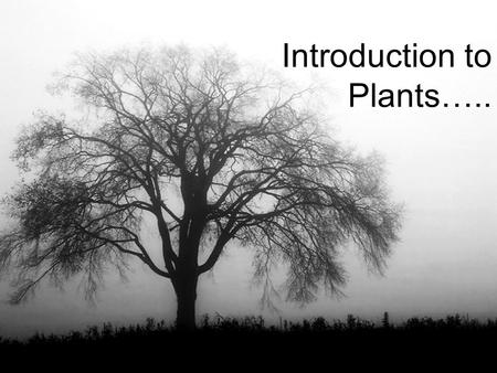 Introduction to Plants…... 2 Biology I Review: What is botany? –The study of plants What is the general traits of the Plant kingdom: –Eukaryotic Cells.