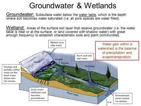 Groundwater & Wetlands Groundwater: Subsuface water below the water table, which is the depth where soil becomes water saturated (i.e. all pore spaces.