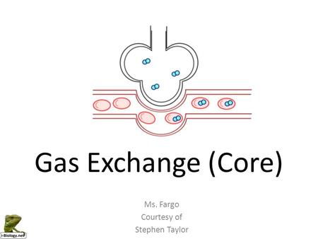 Gas Exchange (Core) Ms. Fargo Courtesy of Stephen Taylor.