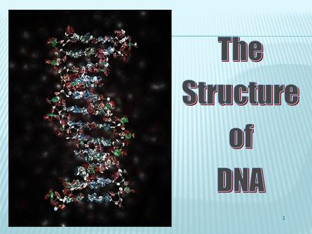 1 1. Label the components that make up the DNA. 2. Draw a box surrounding one nucleotide of the double helix and label this.