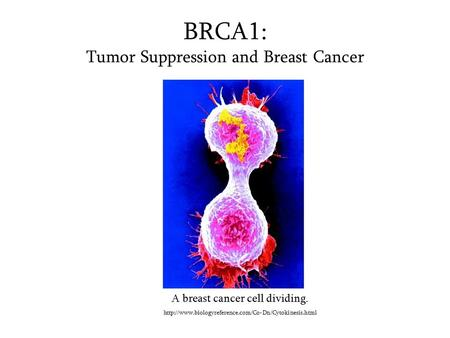 BRCA1: Tumor Suppression and Breast Cancer A breast cancer cell dividing.