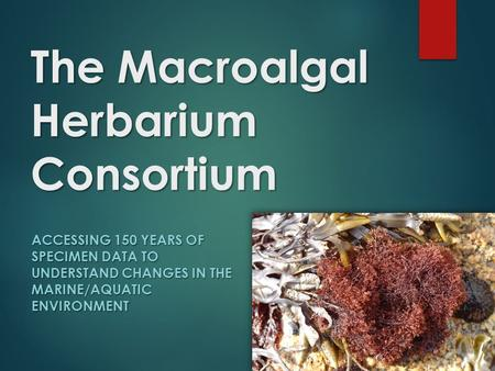 The Macroalgal Herbarium Consortium ACCESSING 150 YEARS OF SPECIMEN DATA TO UNDERSTAND CHANGES IN THE MARINE/AQUATIC ENVIRONMENT.
