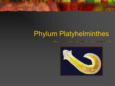 Phylum Platyhelminthes. Basic Facts Name meaning: flatworm Phylum divided into 3 classes Invertebrate Bilateral Symmetry Cephalization Contains body organs.