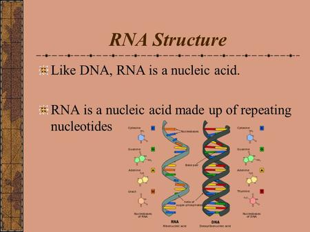RNA Structure Like DNA, RNA is a nucleic acid. RNA is a nucleic acid made up of repeating nucleotides.