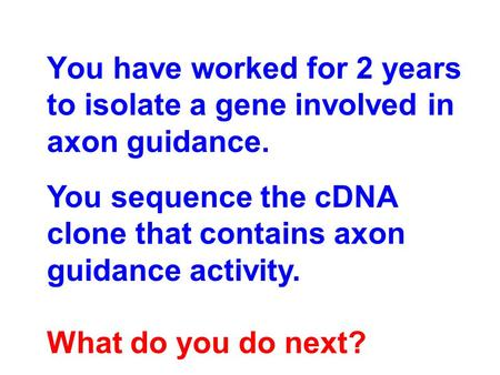 You have worked for 2 years to isolate a gene involved in axon guidance. You sequence the cDNA clone that contains axon guidance activity. What do you.