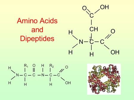 Amino Acids and Dipeptides CH 2 H H NCC OH O H C O H H NCC O H R1R1 H NCC O H R2R2.