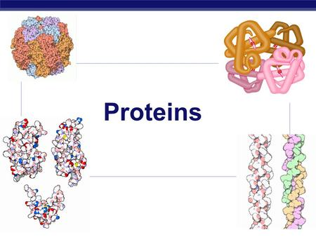 AP Biology 2005-2006 Proteins. AP Biology 2005-2006 Proteins  Most structurally & functionally diverse group of biomolecules  Function:  involved in.