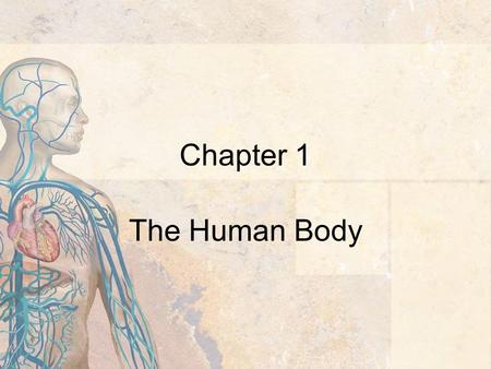 Chapter 1 The Human Body. 2 Introduction Anatomy - the study of the structure of the body Physiology - the study of the function of the body parts Basic.