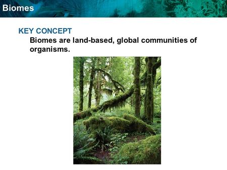 Biomes KEY CONCEPT Biomes are land-based, global communities of organisms.