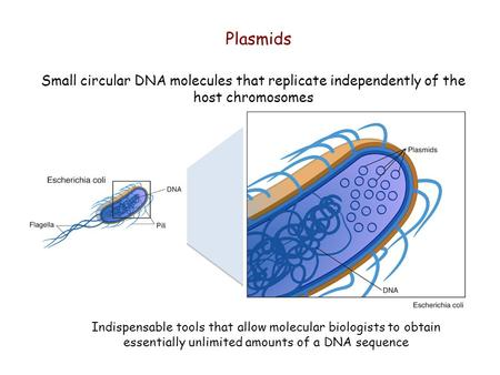 Plasmids Indispensable tools that allow molecular biologists to obtain essentially unlimited amounts of a DNA sequence Small circular DNA molecules that.
