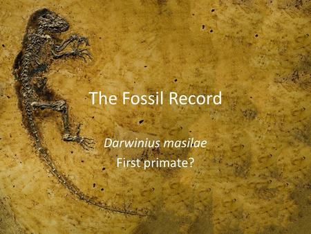 The Fossil Record Darwinius masilae First primate?