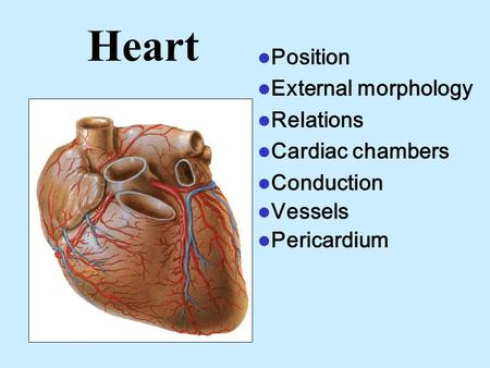Heart Position External morphology Relations Cardiac chambers Conduction Vessels Pericardium.