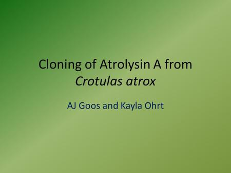 Cloning of Atrolysin A from Crotulas atrox AJ Goos and Kayla Ohrt.