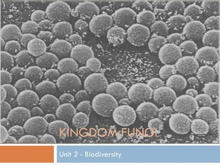 KINGDOM FUNGI Unit 2 - Biodiversity. Kingdom Fungi  Eukaryotic  Mostly Multicellular  Yeasts are unicellular  Heterotrophic by absorption  Walls.