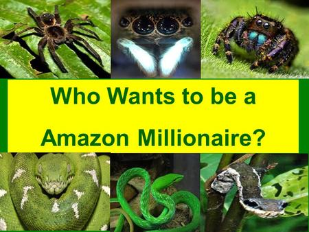 © A Smith Who Wants to be a Amazon Millionaire? © A Smith 15 14 13 12 11 10 9 8 7 6 5 4 3 2 1 £1 Million £500000 £250000 £125000 £64000 £32000 £16000.